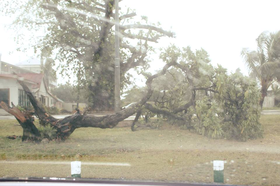 Strong winds knock down trees as flood threat loom at low ...